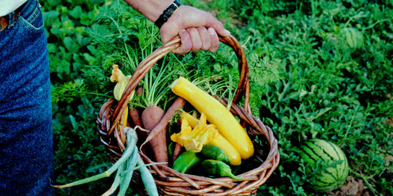 Discover The Treasure of Health Out of Organic Garden